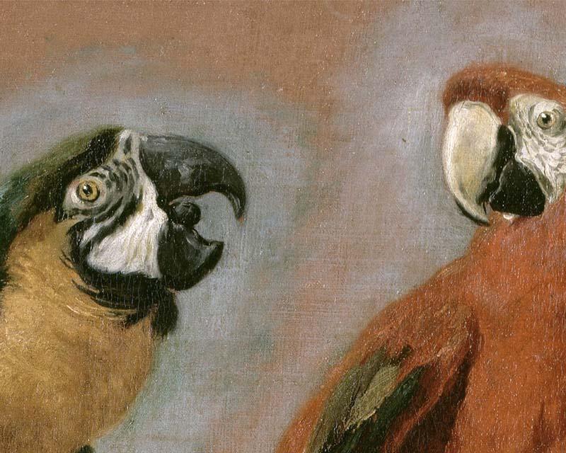 Panneau d coratif quatre perroquets pieter boel - Papier peint panneau decoratif ...