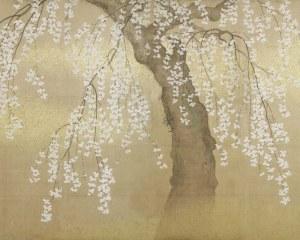 Cerisier Japonais - Papier peint
