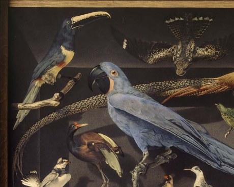 oiseaux exotiques papier peint panoramique en trompe l. Black Bedroom Furniture Sets. Home Design Ideas