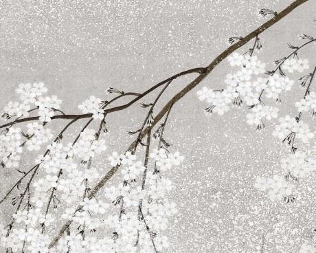 Japanese Cherry - Wallpaper