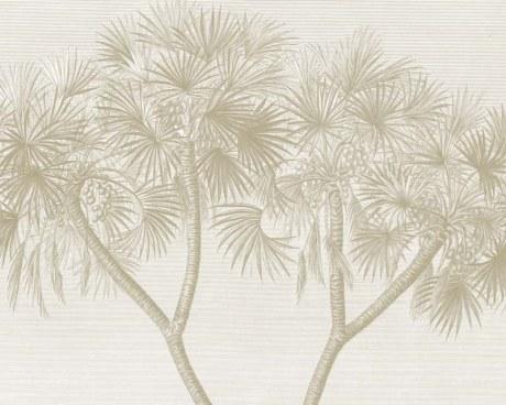 Egypt - Doum Palm - Wallpaper mural