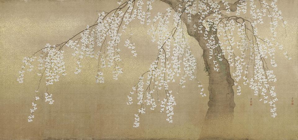 Papier peint cerisier - Japon