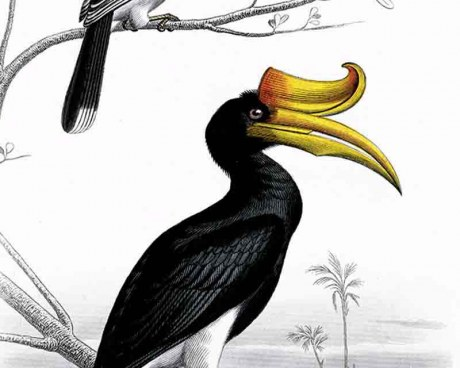 Oiseaux de Cayenne/2  - Panneau décoratif