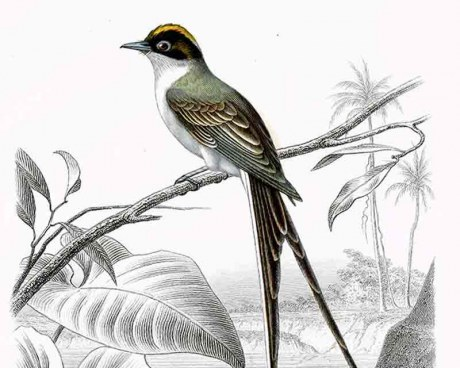 Oiseaux de Cayenne  - Panneau décoratif