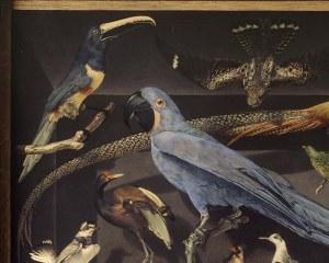 Oiseaux exotiques - Papier peint