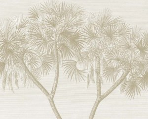 Egypte - Palmier Doum - Papier peint
